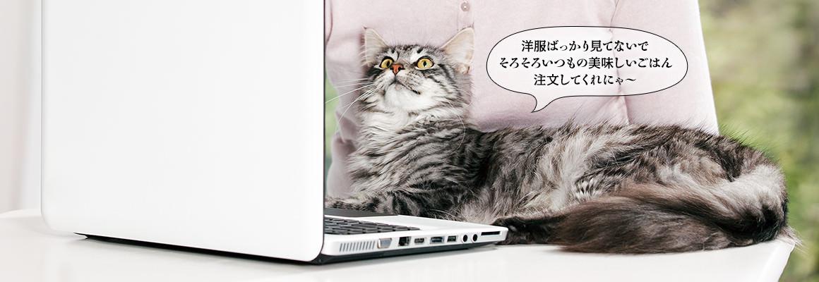 ピュリナワンをねだる猫の画像