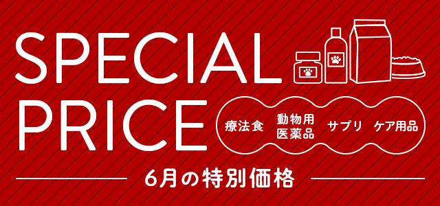 6月の特別価格