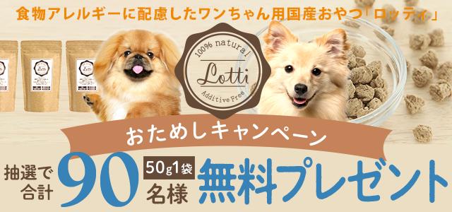 Lottiがお試しできるチャンス!!