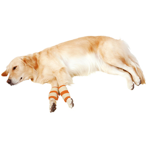 ペティオ zuttone(ずっとね) 老犬介護用 床ずれ予防サポーター 大 4個入