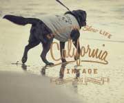 カリフォルニアヴィンテージ 犬服